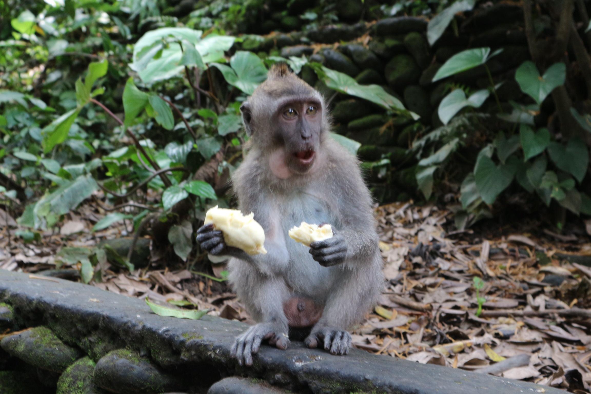 【体験談】バリ島旅行で注意したい8つの事【治安・詐欺・必需品】